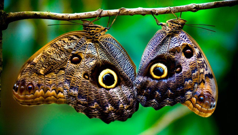 Clases de mariposas