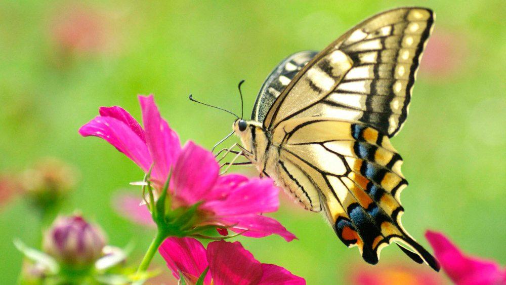 Galera de imgenes Mariposas de colores