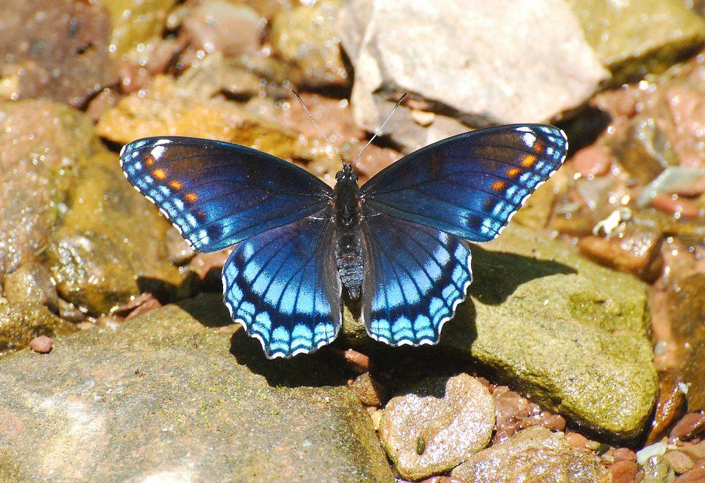 Imagenes De Mariposas De Colores: Colores De Las Mariposas Tornasoladas :: Imágenes Y Fotos