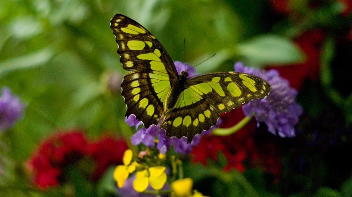 Imagenes De Mariposas De Colores: Colores De Una Mariposa :: Imágenes Y Fotos