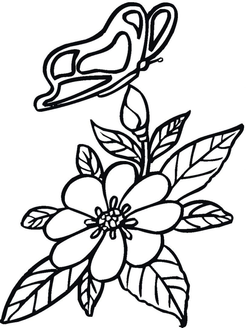 Dibujos de flores y mariposas :: Imágenes y fotos