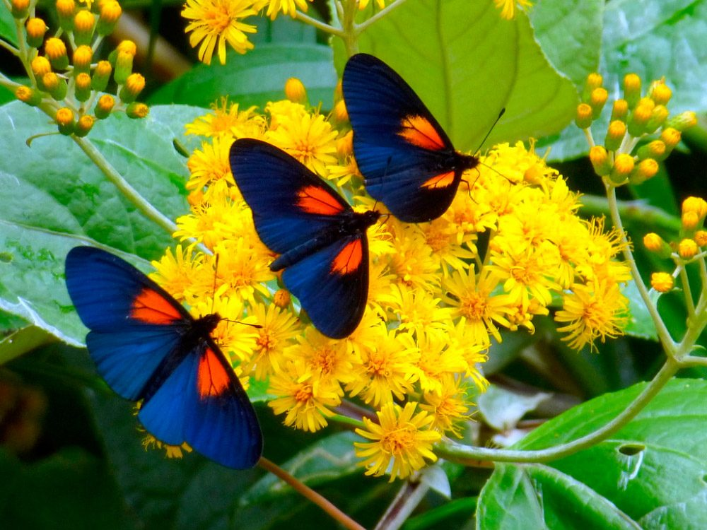 H 225 Bitos De Las Mariposas Diurnas Im 225 Genes Y Fotos