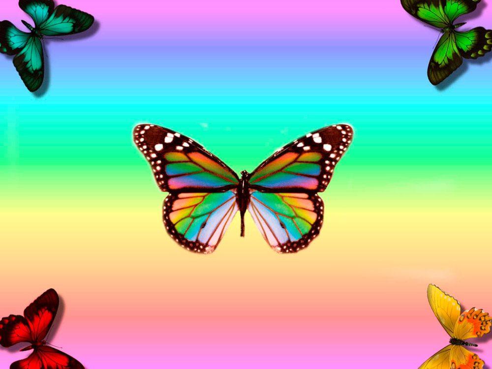 Galería De Imágenes Imágenes De Mariposas