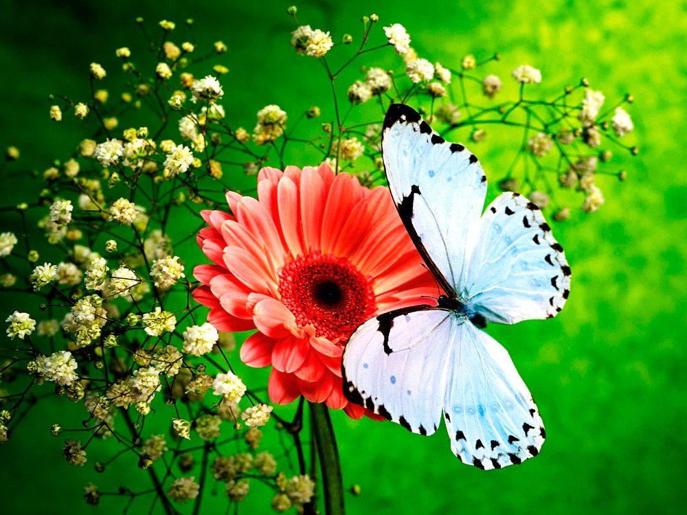 823256c454eff Imágenes de mariposas blancas    Imágenes y fotos
