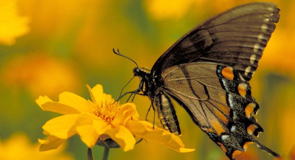 Banco de Imagenes y fotos gratis: Gifs Animados, Mariposas