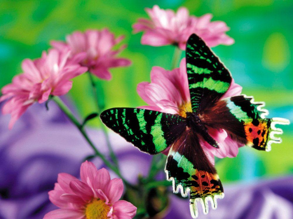 galer a de im genes mariposas de colores