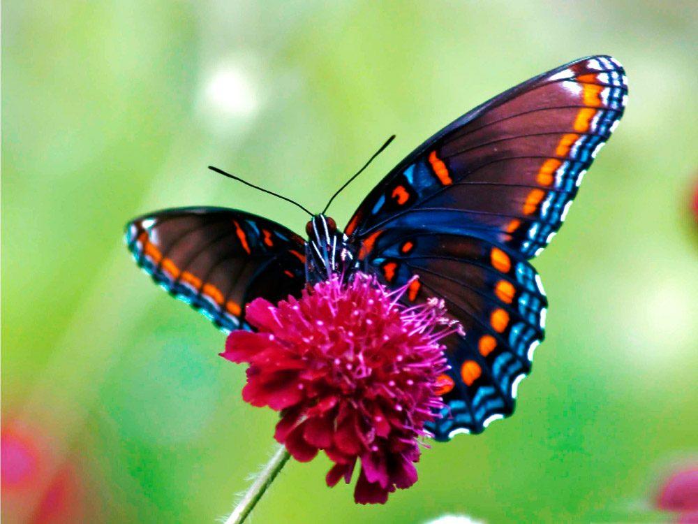 Galer a de im genes mariposas de colores - Mariposas en la pared ...