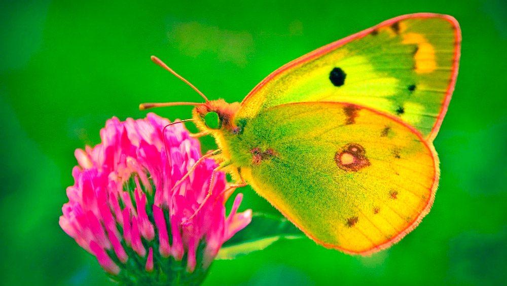 Imagenes De Mariposas De Colores: Galería De Imágenes: Mariposas De Colores