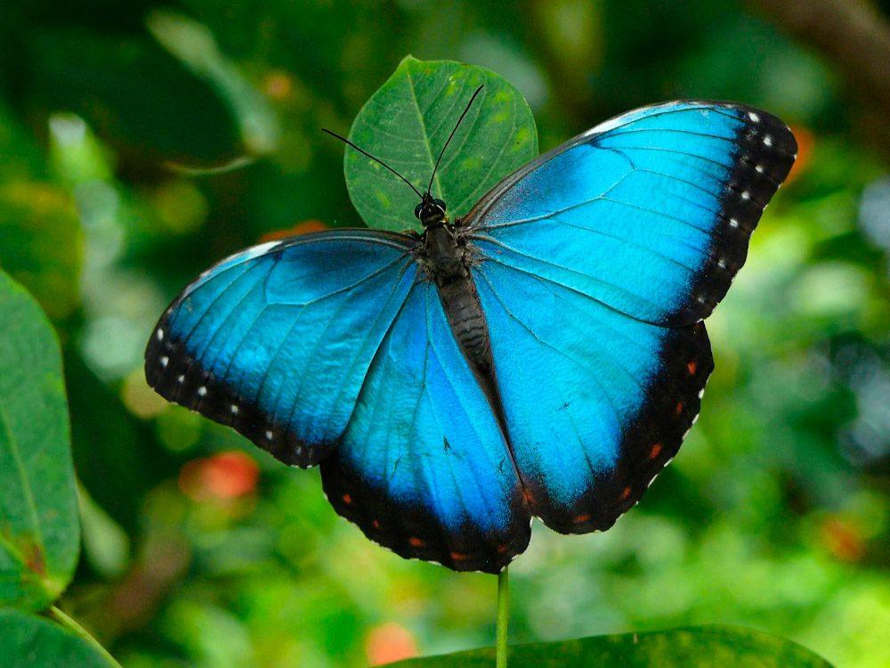 Galería De Imágenes Mariposas De Colores