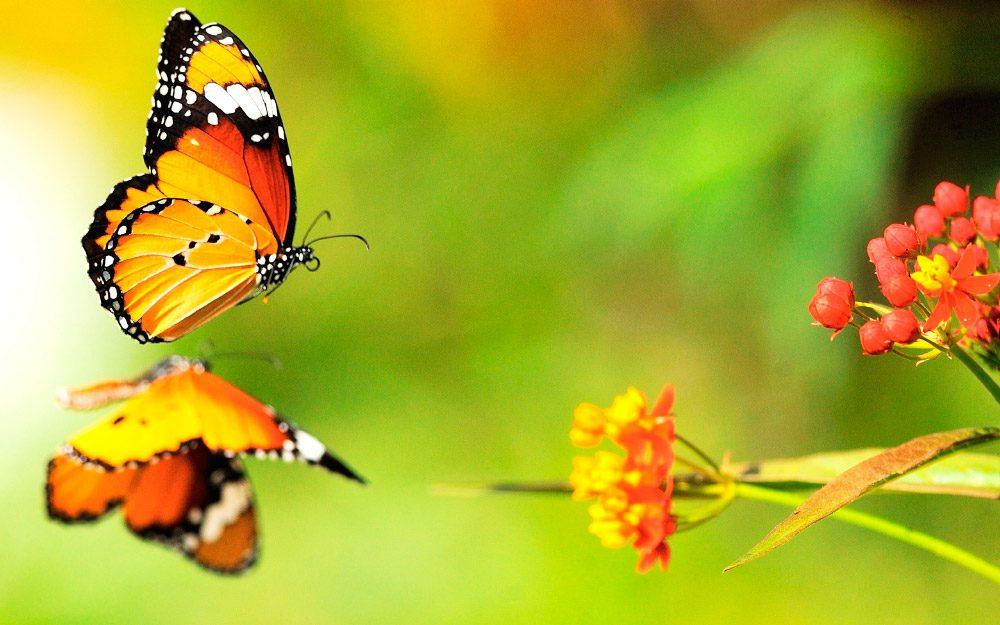 mariposas bonitas im genes y fotos