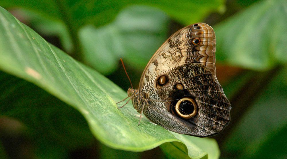 Mariposas bho