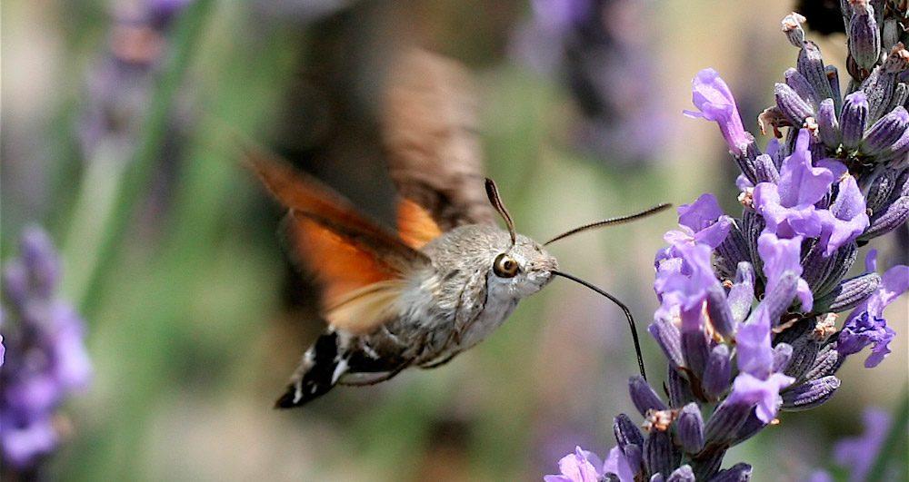 Dibujo de mariposas y flores para imprimir y pintar