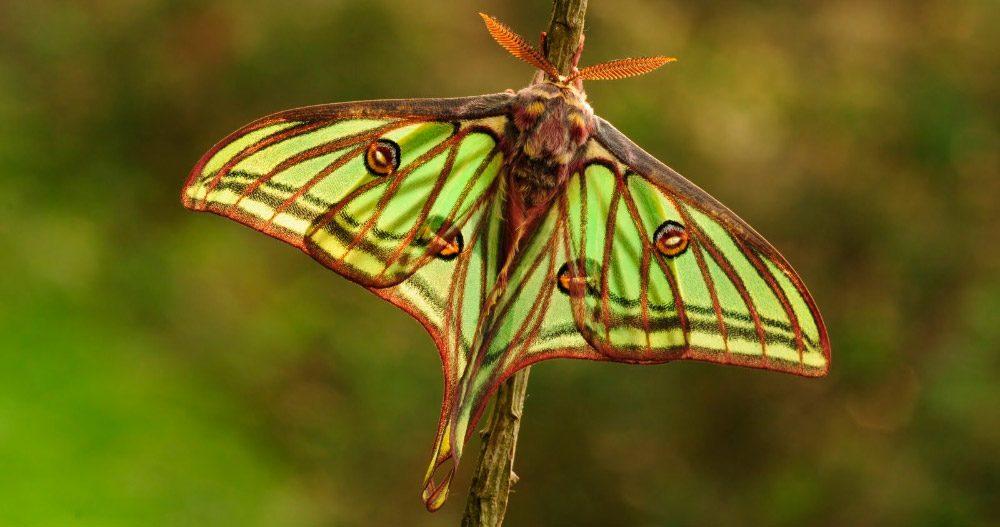 Metamorfosis De Las Mariposas