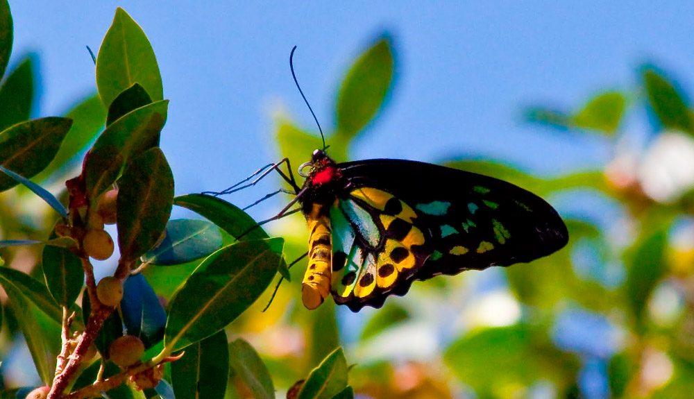significado de las mariposas