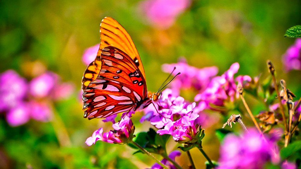 Tipos de mariposas - Imagenes de mariposas de colores ...