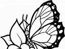 Imgenes y fotos de Mariposas Wiki
